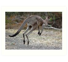 Eastern Grey Kangaroo Art Print