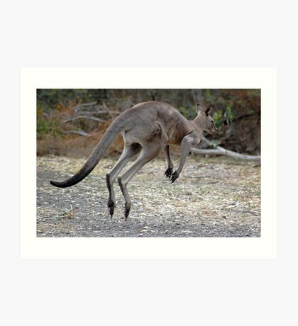 Eastern Grey Kangaroo Art Print