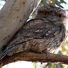 Tawny Frogmouth by Ngakeone