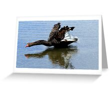Black Swan Take Off Greeting Card