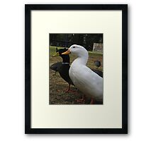 """Will ya take a gander at that silly goose?!"" Framed Print"