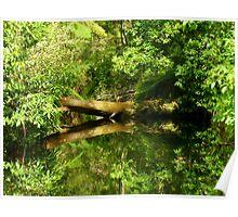 Fallen Tree - reflection Poster
