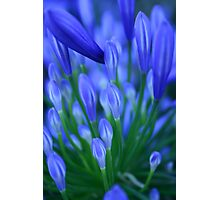 blue congregation Photographic Print