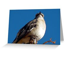 Beauty atop a tree!! Greeting Card