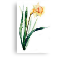 watercolor flower narcissus Canvas Print