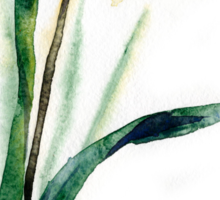 watercolor flower narcissus Sticker
