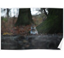 Small squirrel...Big World! Poster