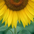 Sunflower Twist by Amanda White