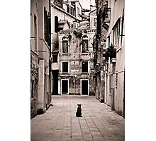 Dog meets Alley Photographic Print