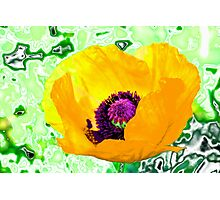 Yellow poppy for spring! Photographic Print