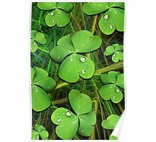 Shamrocks with Dew Drops Pattern Poster