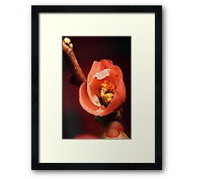 In the Pink. Framed Print