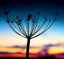 November Sunset by Chris Fleet