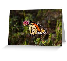 Monarch Delight II Greeting Card