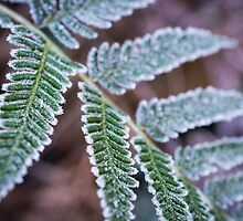 Frosty Fern by Michelle McConnell