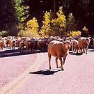 Sheep Heap by steveberlin