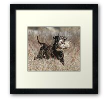 Chocolate Lab with Duck Framed Print