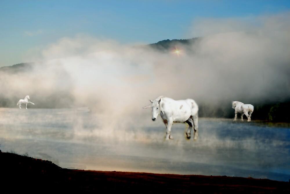 Unicorns in the Mist by Judi Taylor