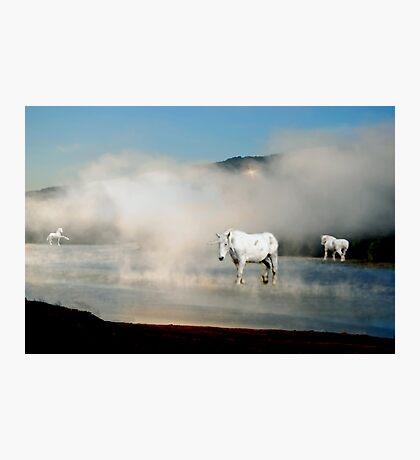 Unicorns in the Mist Photographic Print
