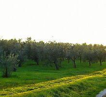 Tuscany: Sunset at countryside by tati69