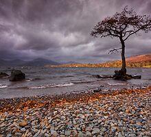Milarrochy Bay - Loch Lomond by Douglas  Latham