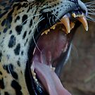 Yikes Jaguar by IanPharesPhoto