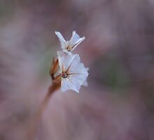 the last ones before winter by Fran E.
