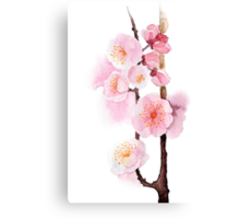 watercolor flowers of apricot Canvas Print