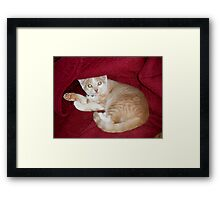 """Wild Bill Hickock Kitten and his """"Man Cave"""" Framed Print"""