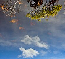 Reflection Series 3 by Ross Jardine