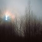 SUNSTAR IN FOG by Chuck Wickham