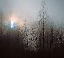 SUNSTAR IN FOG by Chuck Wickham