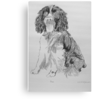 Bruce The Springer Canvas Print