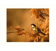 House Sparrow on Marsh Grass Art Print