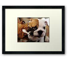 Bulldog Puppies Framed Print