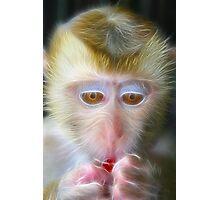 light monkey 2 Photographic Print