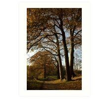 Caressing Autumn Trees Art Print