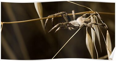 Hanging about by Larrikin  Photography