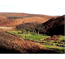 On the Edge of the Moors Photographic Print