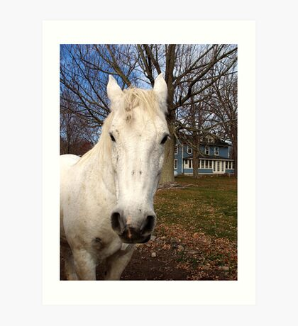 White Clydesdale Art Print