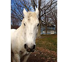 White Clydesdale Photographic Print