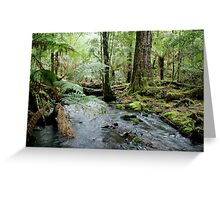 Ferns overhanging a stream in theTarkine Greeting Card
