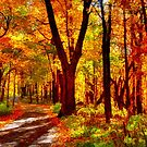 Autumn: Forest Path by Roger Passman