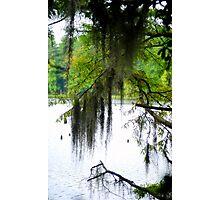 Through The Spanish Moss Photographic Print