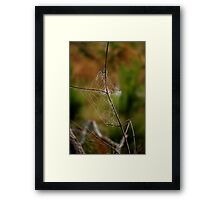 Natures Engineers Framed Print