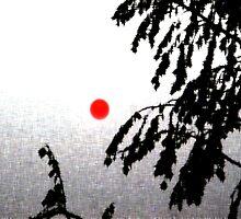 sunset by Rosina  Lamberti