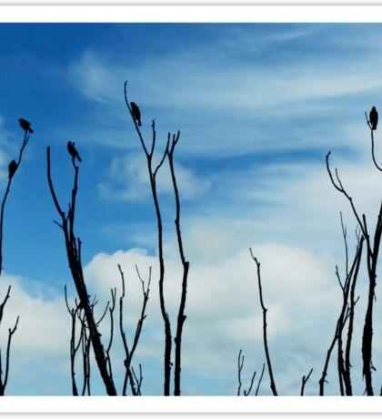 Songbird Silhouette Sticker