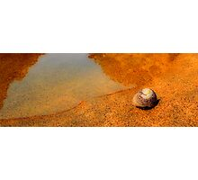 Waiting for the tide (Whelk) Photographic Print