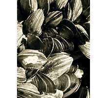 Cockles Photographic Print