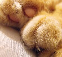 Paws by Tracy Faught